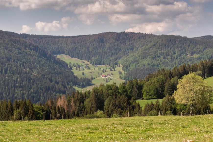 Der Blick richtet sich von einer Wiese talabwärts auf eine Reihe von Nadelbäumen. Im Hintergrund erhebt sich eine bewaldete Hügelkette, auf derem lichten Hang einige Höfe zu erkennen sind.