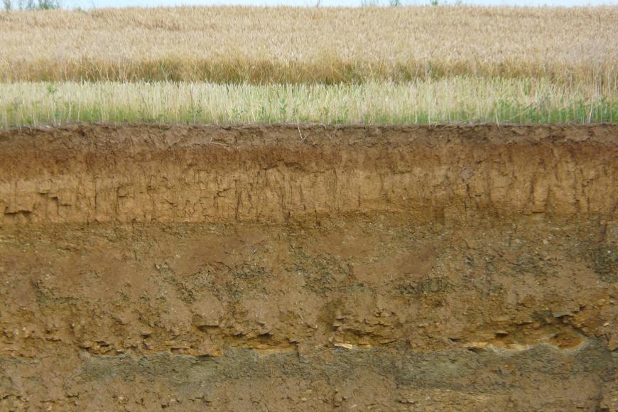 Profilaufnahme eines Steinbruches unter einem Getreidefeld. Gut sind mehrere unterschiedlich gefärbte, waagrecht verlaufende Boden- und Gesteinsschichten erkennbar.