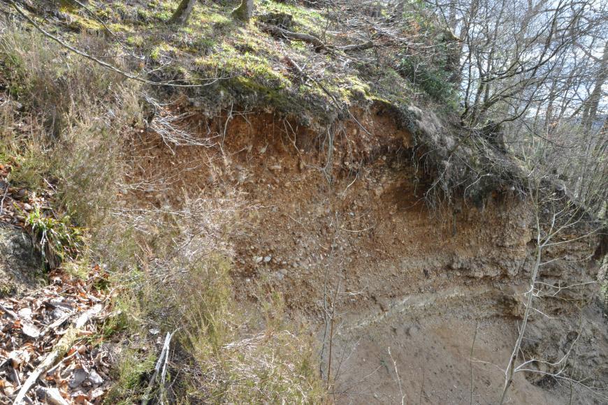 Seitlicher Blick auf die Abrisskante eines Waldhanges. Der obere Bereich ist durchwurzelt, Äste und Zweige hängen herunter. Das offengelegte Boden- und Gesteinsmaterial ist rötlich bis grau.