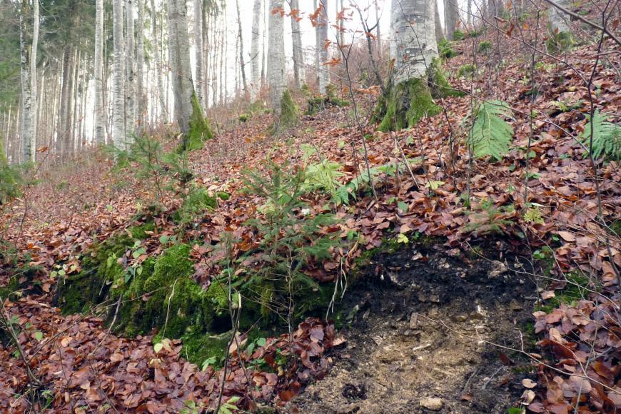 Das Bild zeigt einen steilen, nach links abfallenden bewaldeten Hang. Unter losem Laub und Mossflechten zeigt sich teils schwarze, teils ockerfarbene Erde.