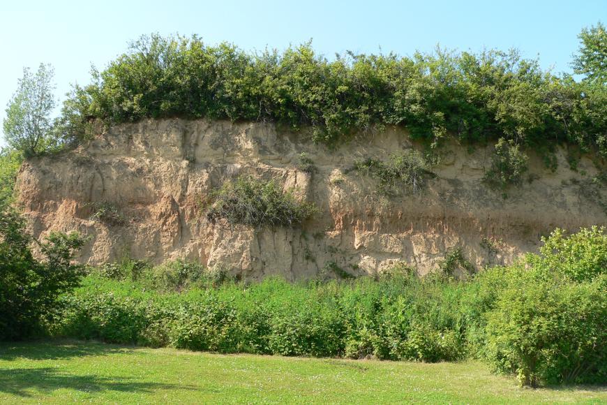 Das Bild zeigt eine von Gebüsch eingerahmte Lösswand. Durch die Mitte der gelblich braunen Wand zieht sich ein waagrechter, rötlich brauner Streifen.