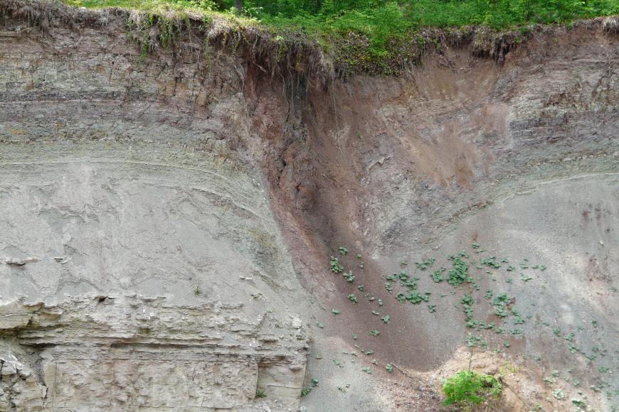Blick auf eine Abbauwand unter Wald. Das sichtbare Gestein ist grau mit violetten Stellen an der Kuppe sowie einer zungenförmigen Rutschung in der Bildmitte. Links davon liegt verwittertes Gestein offen und unterbricht die sonst glatte Oberfläche.