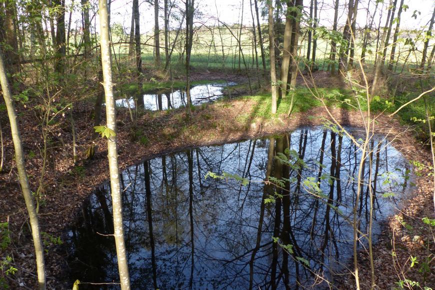 Das Bild zeigt zwei unterschiedlich große, mit Wasser gefüllte Vertiefungen in einem lichten Wald.