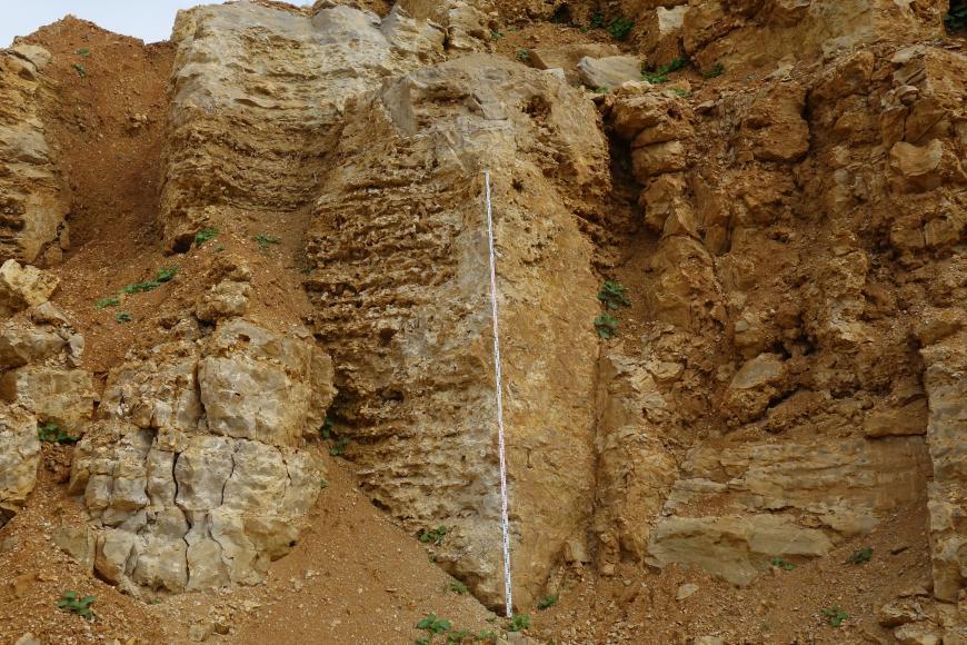 Das Bild zeigt eine ockerfarbene, gelb-braune Steinwand. Die Oberfläche der Wand ist sehr unregelmäßig und im Gestein sind verschiedene Strukturen zu erkennen, wie zum Beispiel aufgeweitete Klüfte, Schlote oder Lösungsspuren.