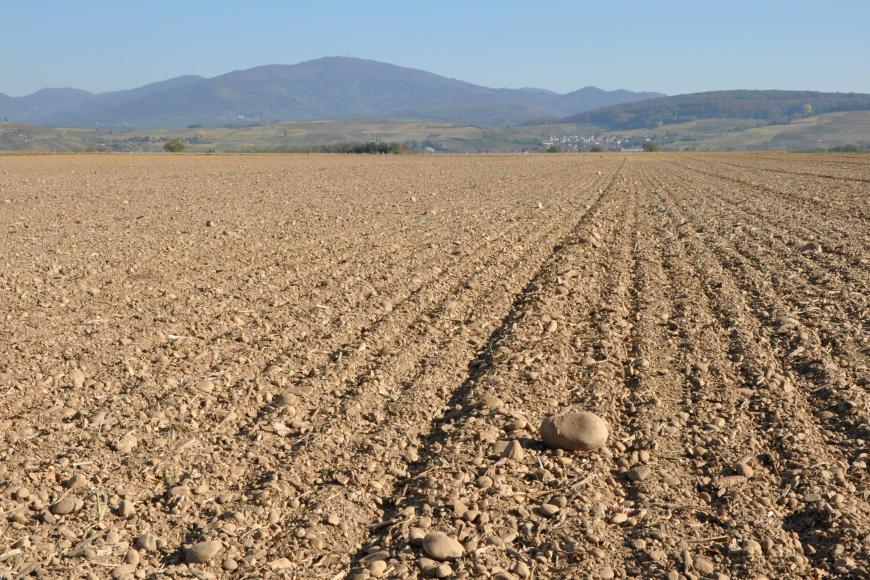 Das Bild zeigt rötlich braune, flache und sehr steinige Äcker, die bis zum Horizont reichen. Dahinter erheben sich rechts bewaldete Hügel und links Berge.