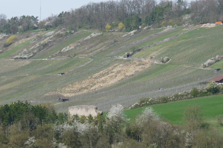 Über Baumspitzen geht der Blick auf einen nach rechts ansteigenden, gewellten Rebhang. Außer Rebstöcken finden sich auch mehrere Reihen von Steinhügeln sowie eine Schotterfläche in der Bildmitte.