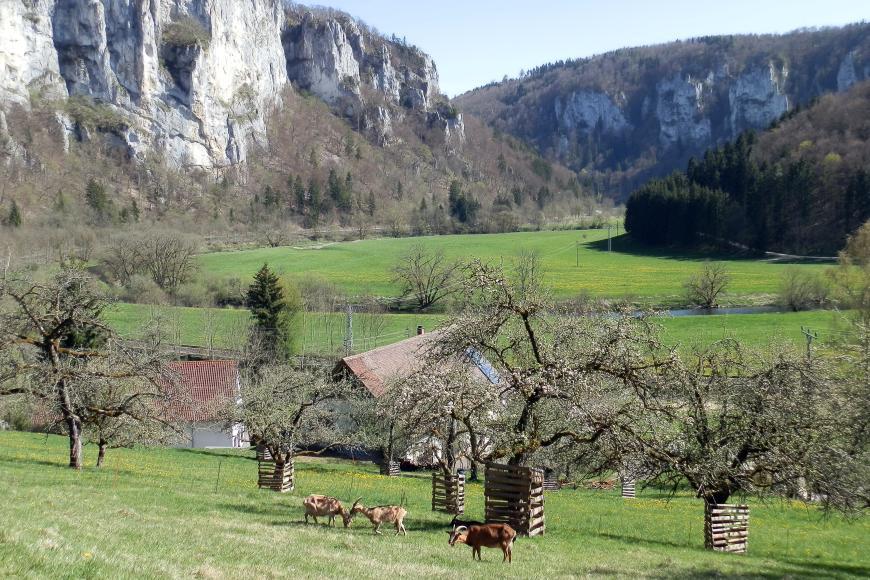 Das Bild zeigt zwei hoch aufragende, mit Nischen und Vertiefungen versehene Felsmassive; links in der Sonne, rechts im schattigen Hintergrund. Davor breiten sich grüne Wiesen aus, durchquert von einem Fluss. Auch Obstbäume und Ziegen sind zu sehen.