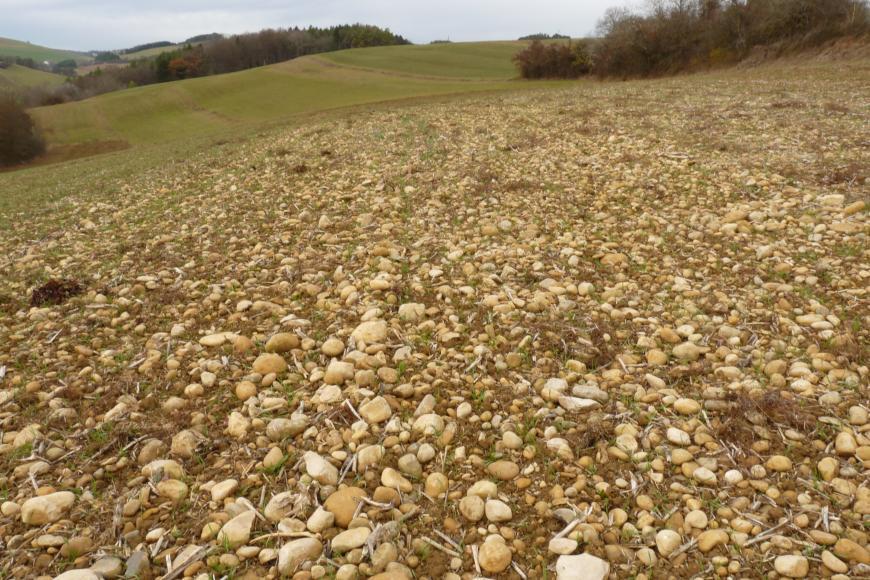 Das Bild zeigt einen sehr kiesigen, nach links absinkenden Ackerboden. Im Hintergrund ist eine wellige Landschaft mit weiteren Äckern sowie Waldflächen erkennbar.
