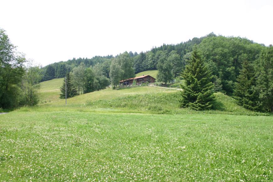 Man blickt auf einen in der unteren Hälfte mit Wiese bedeckten und in der oberen Hälfte mit Nadelbäumen bewachsenen Hügel. Am Übergang in der Bildmitte befindet sich ein Holzhaus.
