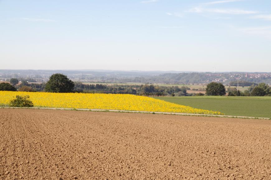 Das Bild zeigt einen hellbraunen Acker im Vordergrund, an den sich zur Bildmitte hin ein blühendes Sonnenblumenfeld und eine Grünfläche anschließen. Im dunstigen Hintergrund sind links bewaldete Bergrücken erkennbar.