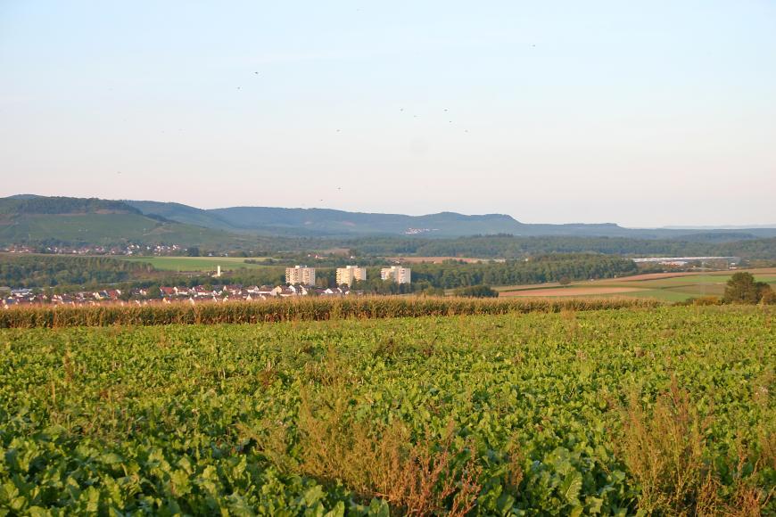 Über hohen Pflanzenbewuchs geht der Blick auf ein flachhügeliges Tal mit einer Siedlung links und Waldflächen. Zum Hintergrund hin steigen bewaldete, stufenförmige Berge auf.