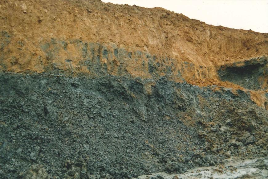 Blick auf eine Abbauwand in einer ehemaligen Tongrube. Die untere Hälfte der Wand besteht aus mittelgrauem Gestein, darüber befindet sich braungelbes Gestein.