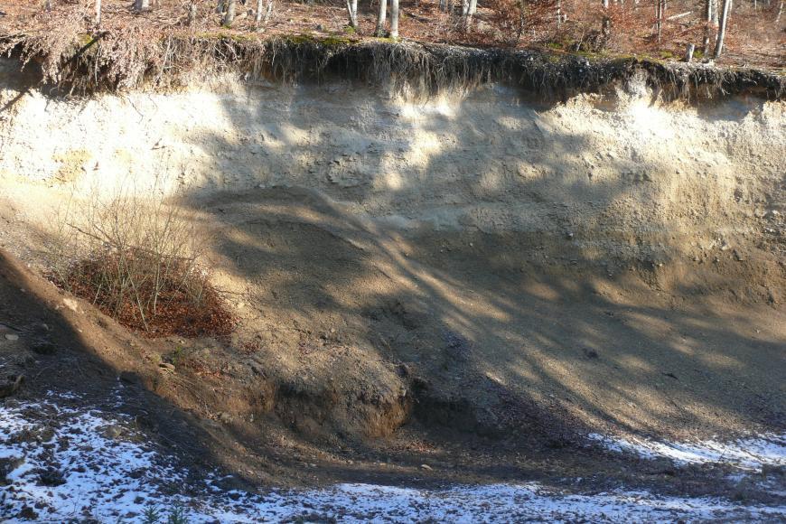 Das Bild zeigt die Abrisskante eines Waldhanges. Das abgerutschte, nach rechts geneigte Material hat eine gelblich braune bis braune Färbung. Unterhalb der Böschung liegt Schnee.