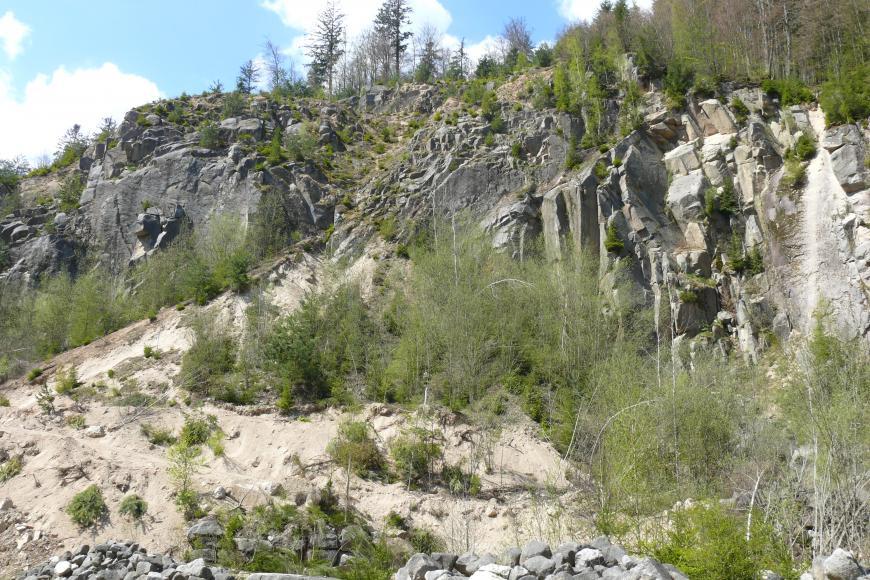 Stark mit grünen Büschen und Sträuchern bewachsener Aufschluss aus hellbeigem bis hellgrauem Gestein. Der Aufschluss steigt nach rechts oben an, im vorderen Teil befinden sich Gerölle, dahinter eine stark geklüftete Felswand.