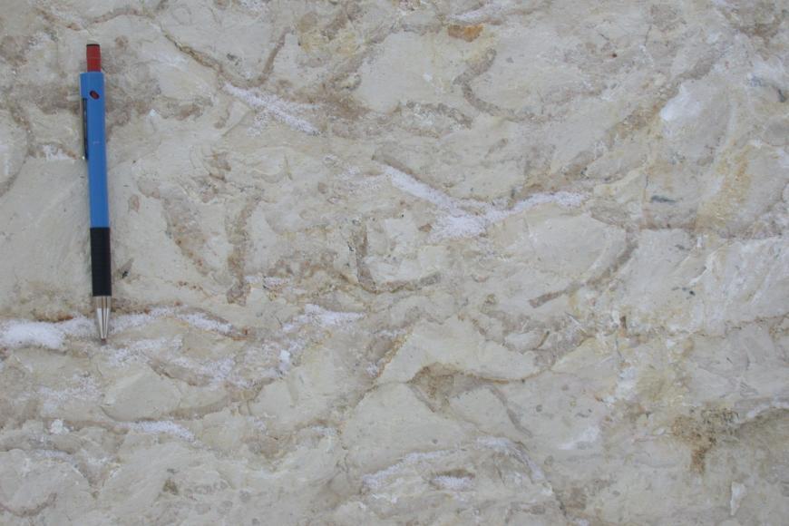 Schwamm-Mikroben-Kalkstein