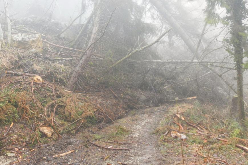 Das Bild zeigt einen Forstweg an einem Hang. Es ist etwas nebelig. Der Weg ist durch eine Anhäufung von umgerissenen Bäumen, Erdmaterial und Totholz versperrt. Links im Bild liegen am Hang zwei größere Felsblöcke.