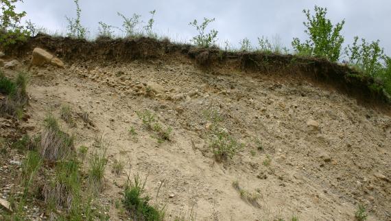 Das Bild zeigt einen hellbraunen, kiesigen Hang, der nach rechts verläuft. An der oberen Kante sind Pflanzen und Wurzeln erkennbar.