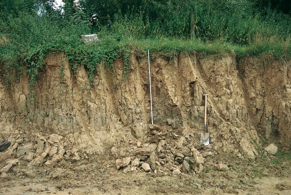 Bodenaufschluss aus circa zwei Meter mächtigem hellbraunem, geröllführendem Boden unter einer Wiese mit Büschen. In der Mitte des Aufschlusses sind ein Maßstab und eine Schaufel zu erkennen.