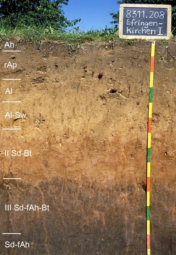 Das Foto zeigt ein Bodenprofil unter Wald. Es handelt sich um ein Musterprofil des LGRB. Das in sieben Horizonte unterteilte Profil ist etwa 1,50 m tief.