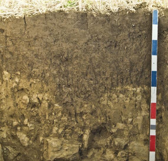 Das Foto zeigt ein aufgegrabenes, über 1 m tiefes Bodenprofil.
