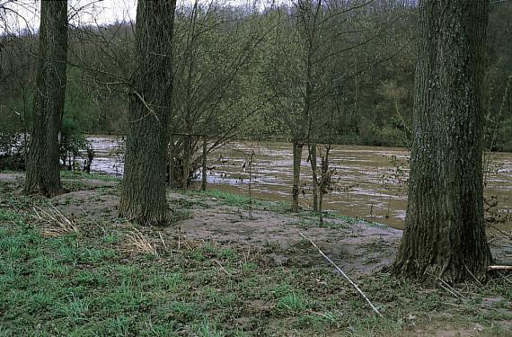 Blick auf die Ufer eines Hochwasser führenden Flusses. Das vordere, dem Betrachter nahe und mit Bäumen bestandene Ufer zeigt dabei deutliche Spuren von Überflutung, wie abgelagertes Erdreich oder angeschwemmtes Stroh.