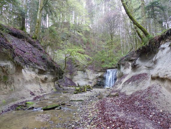 Blick auf eine steile, bewaldete Schlucht mit Bach und einem Wasserfall im Hintergrund. Die beiderseitigen Hänge im Vordergrund zeigen kahle, gelblich graue Böden.