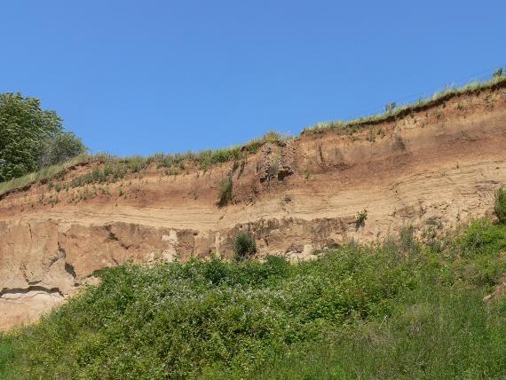 Blick auf eine rötlich braune Steinbruchwand mit waagrechten Schleifspuren. Der untere Teil der Wand ist von Gebüsch verdeckt.