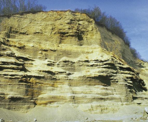 Blick auf die hohe Wand einer Kiesgrube. Das gelblich braune Material weist im unteren Teil hellere Streifen und kleine vorspringende Dächer auf. Auf der Kuppe wachsen dünne Bäume und Sträucher.