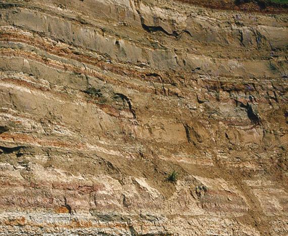 Gesteinswand aus schwach verfestigtem, ockerfarbenem bis leicht rötlichem, in unterschiedlich mächtigen Bänken anstehendem Gestein.