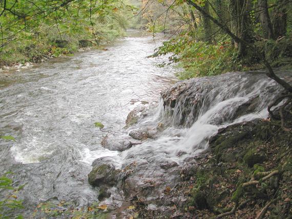 Blick auf einen von links kommenden, vom Betrachter wegführenden Bach. Im Vordergrund rechts überspült ein niedriger Wasserfall kleine vorspringende Felsen, ehe er in den Bach mündet. Die Ufer sind von Bäumen und wild wuchernden Sträuchern gesäumt.