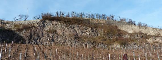 Aufwärts gerichteter Blick auf einen Hang mit Rebstöcken. Am oberen Ende erhebt sich eine langgestreckte, nach rechts abfallende Felswand. Auf der Kuppe der Wand verlaufen Stein- und Betonmauern.