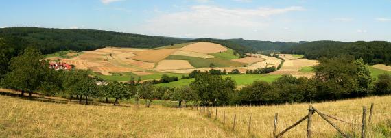 Blick über eingezäunte Streuobstwiesen auf eine tiefer liegende, rundliche Erhebung. Diese Erhebung ist zum Vordergrund hin in zahlreiche Felder unterteilt, zum Hintergrund hin jedoch bewaldet.