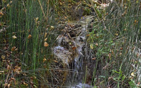 Zwischen dichtem Pflanzenbewuchs ist in der Bildmitte ein schmaler Wasserlauf mit kleinen Gefällstufen erkennbar.