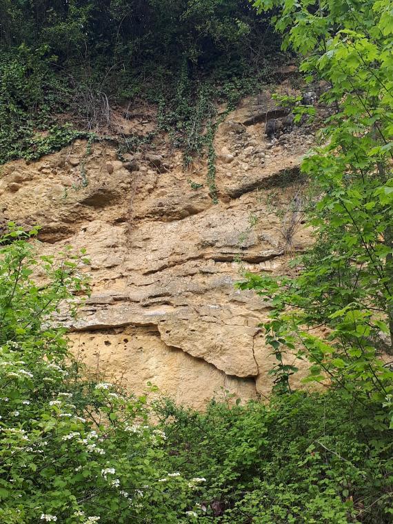 Blick auf eine alte hohe Steinbruchwand. Das gelbliche bis hellbraune Gestein zeigt Risse und kleinere, schmale Überhänge. An den Seiten und von unten wachsen Bäume und Sträucher, oben ist Wurzelwerk erkennbar.