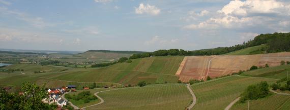Von einer flachen Ebene ganz links geht der Blick zu nach rechts ansteigenden, stark gewölbten Reb- und Ackerflächen. Mehrere schmale Fahrwege durchziehen das Gelände, dessen Kuppen bewaldet sind.