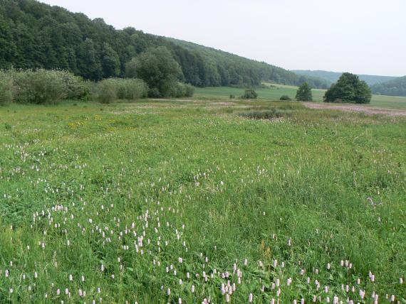 Das Bild zeigt eine blühende grüne Wiese mit dunkleren Stellen im Mittelgrund. Angrenzend weitere Grünflächen sowie bewaldete Hänge.