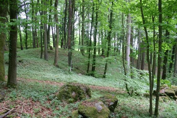 Lichtdurchflutete bewaldete und mit kleineren Pflanzen bewachsene Schutthalde.