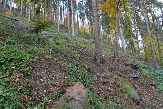 Blick auf einen sehr steilen, nach links aufsteigenden Waldhang. Zwischen den Baumstämmen sind einzelne, teils halb vergrabene, größere Steinblöcke sichtbar.