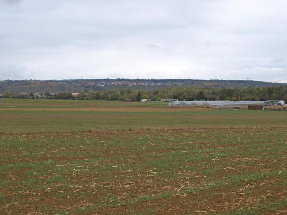 Blick auf flache, teilweise begrünte Ackerflächen mit Gewächshäusern und Wald im Hintergrund. Noch weiter entfernt verläuft ein flacher bewaldeter Hangrücken mit einer Siedlung darauf.