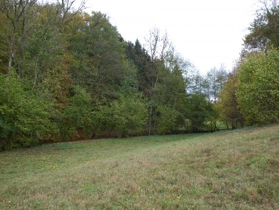 Blick auf einen nach rechts ansteigenden Wiesenhang. Im Grün der Wiese zeigen sich braune Stellen. Entlang der Wiese stehen Laub- und Nadelbäume.
