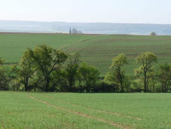 Das Bild zeigt welliges, vom Betrachter wegführendes und zum Hintergrund wieder ansteigendes Hügelland. Die darauf verteilten, zumeist begrünten Ackerflächen werden in der Bildmitte durch eine Baumreihe getrennt.
