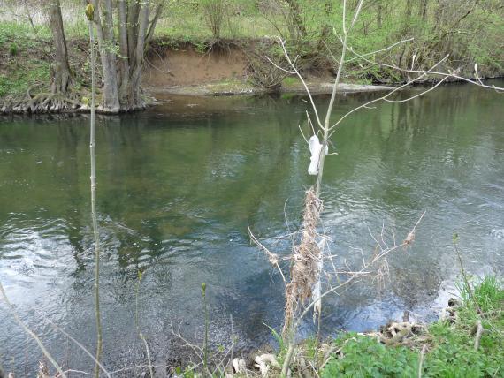 Blick auf einen von links nach rechts fließenden Fluss, der fast das ganze Bild ausfüllt. Im Hintergrund ist das Ufer zu sehen; teils mit Bäumen und Gebüsch bewachsen, teils offen. Im Vordergrund ist Treibgut erkennbar.