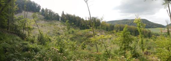 Panoramabild einer Hangrutschung mit umgestürzten Bäumen. Der Verlauf der Rutschung geht von links nach rechts. Kuppe und Seite des Hanges sind bewaldet.