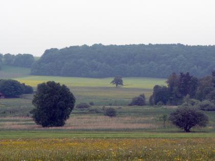 Das Bild zeigt eine zum Hintergrund hin ab- und wieder aufsteigende Landschaft mit Wiesen und Heideflächen im Mittelgrund. Vereinzelt stehen Bäume und verteilt sich Gebüsch. Im Hintergrund zieht sich ein größerer Waldstreifen nach rechts.