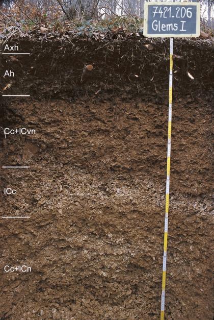 Das Foto zeigt ein Bodenprofil des LGRB unter Wald. Das in fünf Horizonte gegliederte, oben schwärzliche Profil hat eine Tiefe von 1,50 m. Rechts oben zeigt eine Tafel den Namen und die Nummer des Profils an.