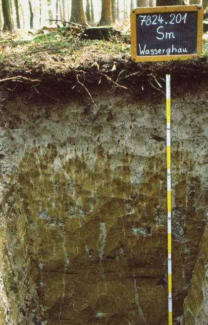 Musterprofil eines Bodens, welcher ganz oben dunkelbraun, dann hellgrau und nach unten hin grünlich ist. Rechts befindet sich ein Maßstab und darüber eine Kreidetafel mit Beschriftung.