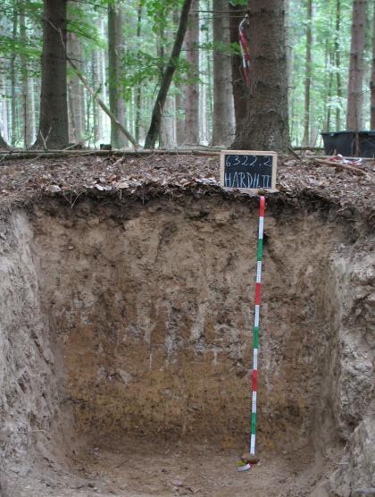Das Bild zeigt ein aufgegrabenes Bodenprofil unter Wald. Das Profil ist durch eine beschriftete Kreidetafel als Musterprofil des LGRB ausgewiesen. Bei dem 1,20 m tiefen, graubraunen Profil sind Seitenwände und hintere Wand sichtbar.