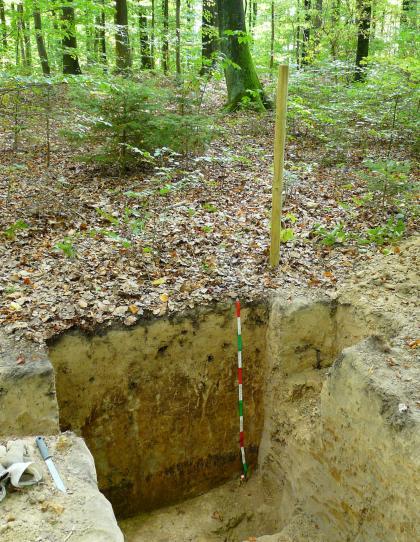 Das Foto zeigt eine aufgegrabene Profilgrube in einem lichten Wald. Das gelblich bis rötlich braune Profil ist über 1 m tief.