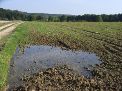 Das Bild zeigt einen bepflanzten Acker, der bis zum Waldrand im Hintergrund reicht. Während jedoch ein Fahrweg links trocken erscheint, steht auf dem Acker im Vordergrund eine große Wasserpfütze.