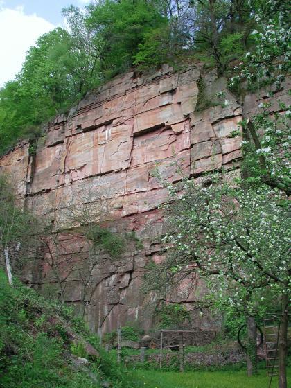 Blick auf eine hohe, rötlich graue Steinbruchwand. Das oben und unten zugewachsene Gestein besteht aus größeren Blöcken. Im Vordergrund ist ein Zaun zu erkennen. Rechts daneben steht ein blühender Baum.